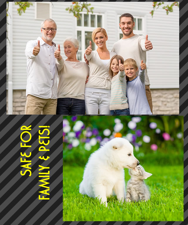 Pest control solutions safe for family and pets.