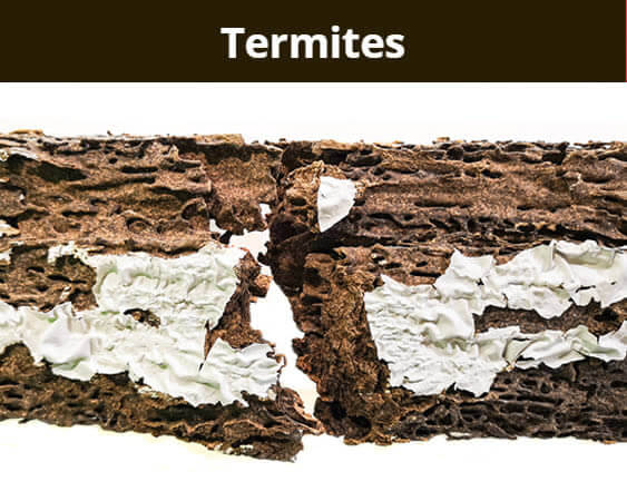 Image showing termite damage
